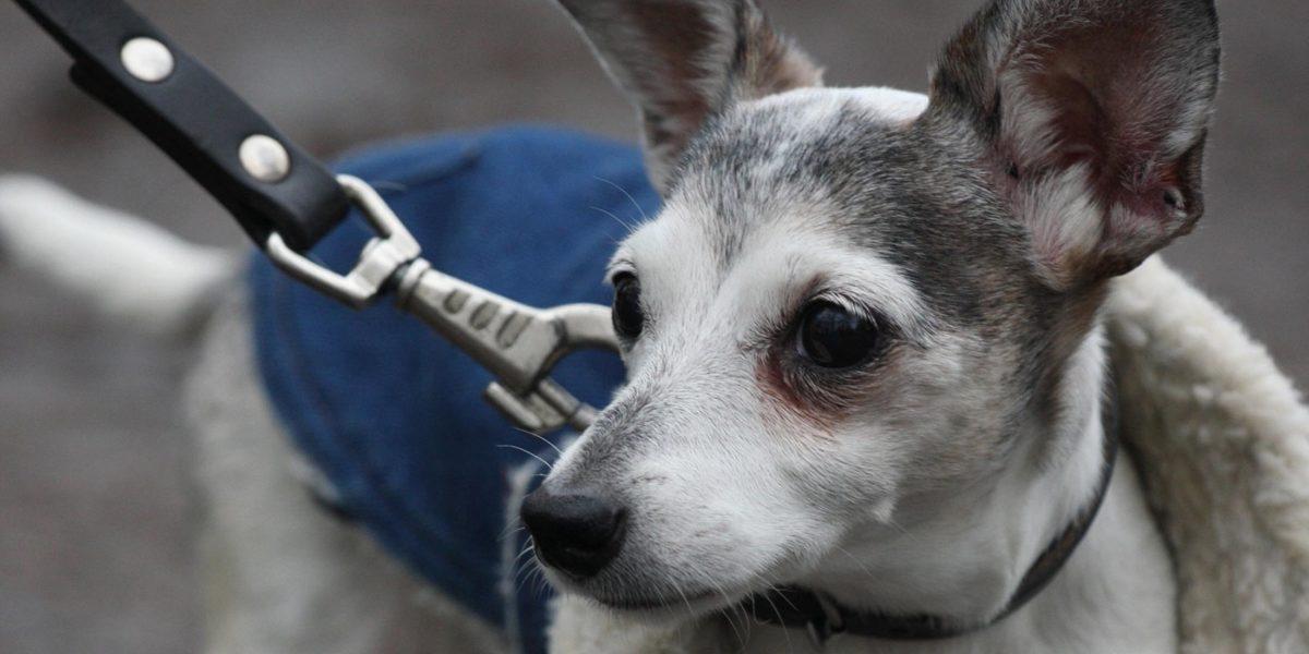 Koninklijke Hondenbescherming